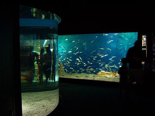 Aquarium_de_La_Rochelle_-_Bassins_003 (1)