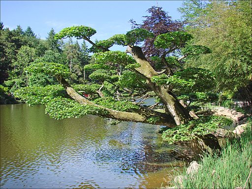 Le_lac_Parc_oriental,_Maulevrier